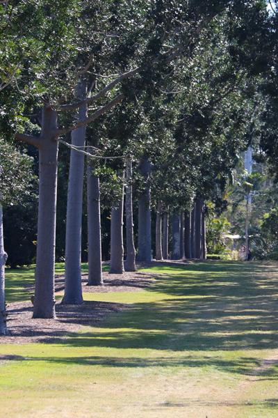 Sherwood Arboretum