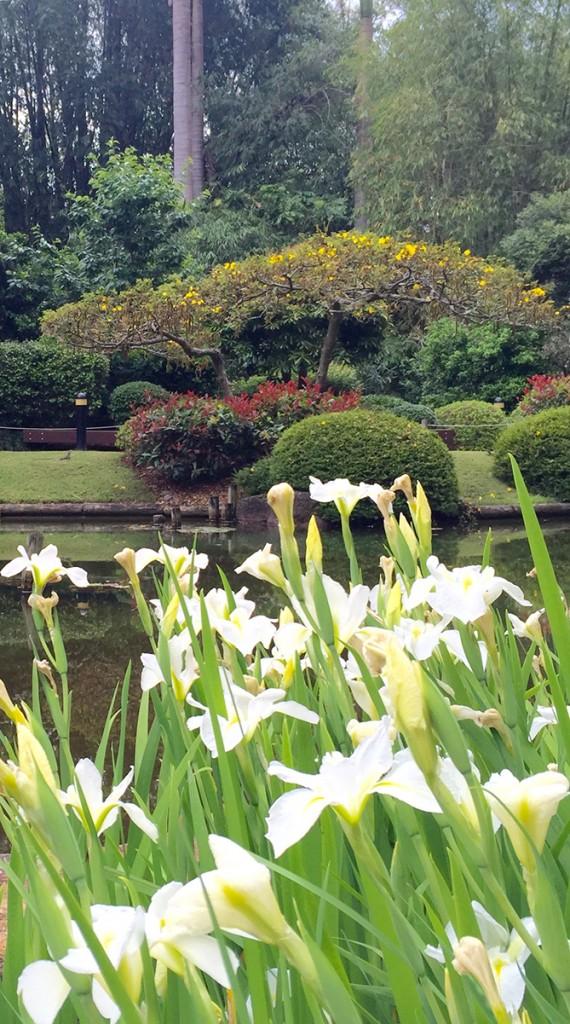 Brisbane Botanic Gardens Mount Coot Tha - Japanese Gardens
