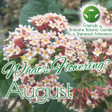 What's Flowering in Brisbane's Botanic Gardens – August