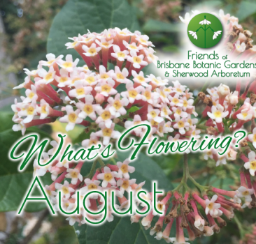 What's Flowering in August at the Brisbane Botanic Gardens