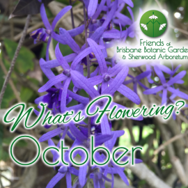 What's Flowering in Brisbane's Botanic Gardens – October