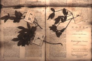 Banks specimens found inside a copy of Paradise Lost