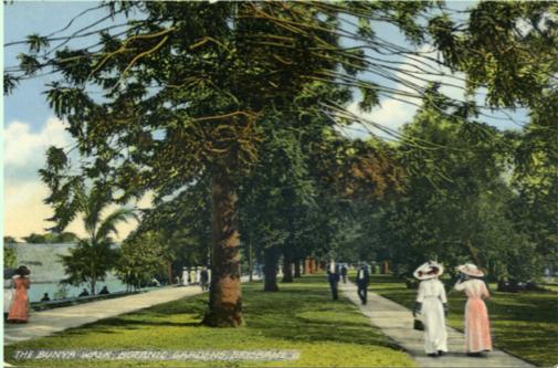 Bunya Walk 1898 Photograph copyright BCC