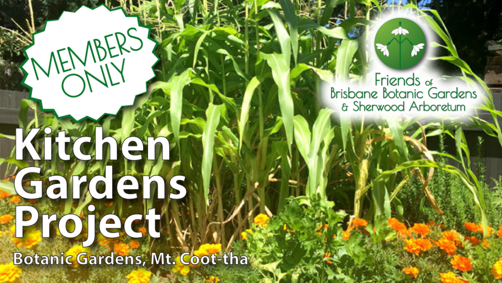 Kitchen Gardens Project Friends of Brisbane Botanic Gardens, Mt. Coot-tha