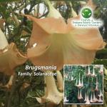 Brugsmania