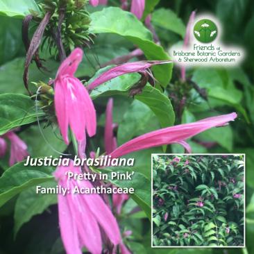 Justicia brasiliana