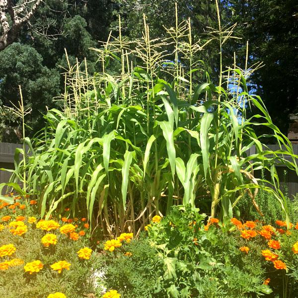 Kitchen Gardens Project Botanic Gardens, Mt. Coot-tha