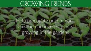 Growing Friends