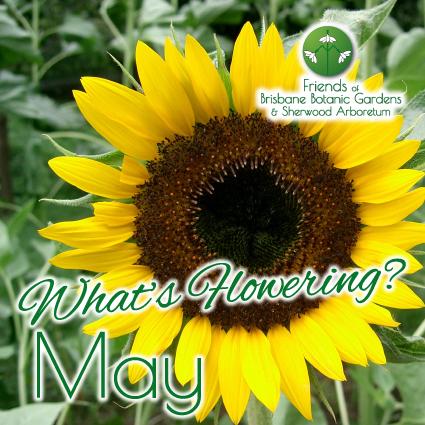 Whats Flowering in Brisbane Botanic Gardens & Sherwood Arboretum May