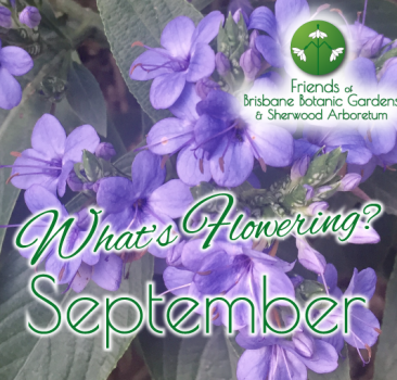 What's Flowering in September at the Brisbane Botanic Gardens