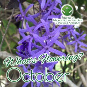 Whats Flowering in Brisbane Botanic Gardens & Sherwood Arboretum October