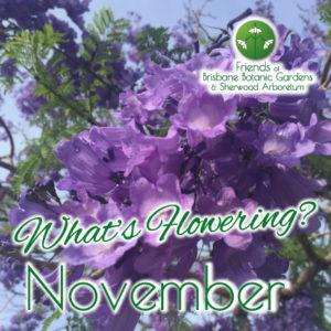 What's Flowering in Brisbane's Botanic Gardens – November