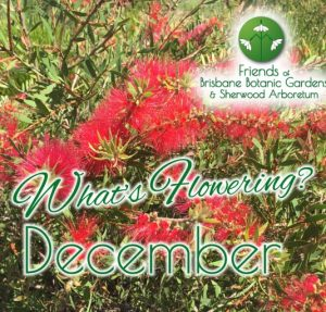 Whats Flowering in Brisbane Botanic Gardens & Sherwood Arboretum December