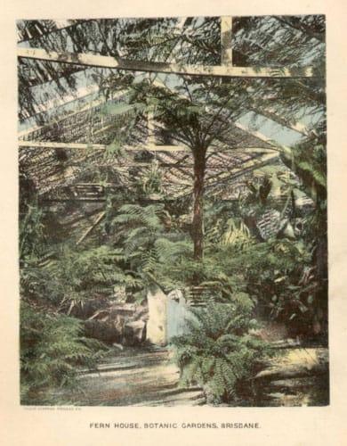 Philip MacMahon's Fernery (1890s)