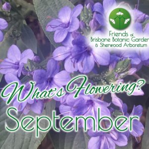 Whats Flowering in Brisbane Botanic Gardens & Sherwood Arboretum September