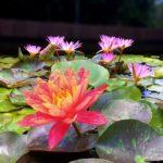 Mt Coot tha Botanic Gardens Jim Dobbin